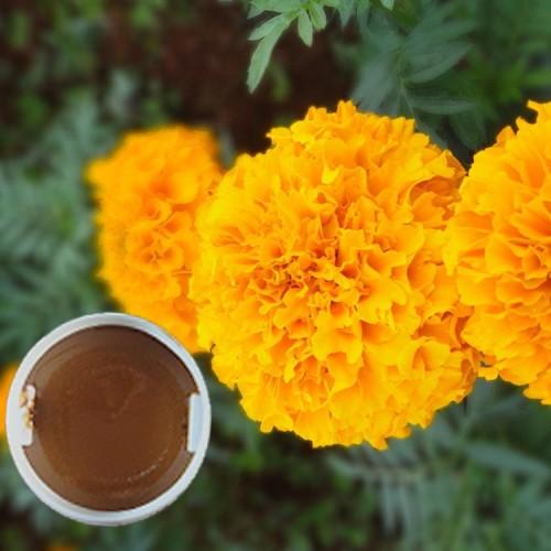 叶黄素浸膏 用于各种饲料