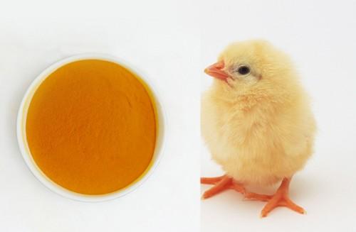 肉鸡皮肤着色 天然叶黄素 万寿菊提取