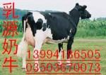 出售进口高产奶牛