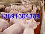 陕西生猪养殖基地,生猪价格,生猪代办