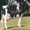 肉牛场 肉牛养殖 肉牛养殖场 山西肉牛 肉牛价格