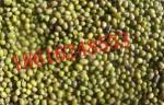 长期批发出售大量优质绿豆