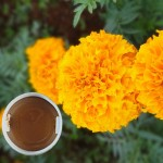 万寿菊提取物 叶黄素 代替合成 加丽素 天然饲料着色剂