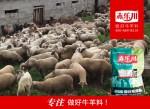北京育肥羊饲料厂家