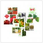 桑叶提取物  桑叶粉  桑叶速溶粉 10:1 UV检测 1公斤起订 多种规格 宁夏凯源生物